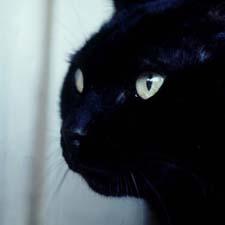 Black Cat / SeacoastNH.com