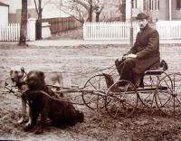 Dog Cart from the Thom Hindle Collection