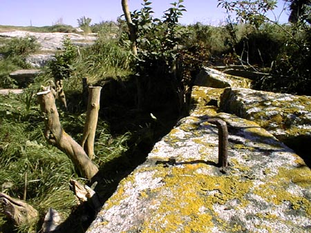 Detail of the Site after large shrubs were cleared showing remains of early metal fencing / SeacoastNH.com