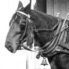 Horsedrawn Grocery Cart 1900/ Strawbery Banke Museum