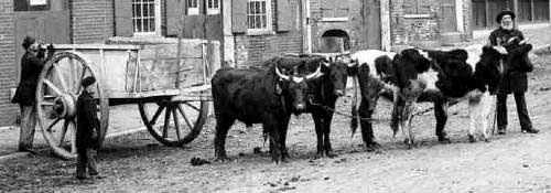 Ox carts in Bow Street, Portsmouth, NH / Strawbery Banke
