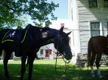 NH mounted police horses seem at home in historic Strawbery Banke Museum / SeacoastNh.com
