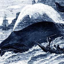 Whaling engraving / SeacoastNH.com
