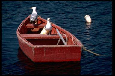 Gulls in Boat (c) Dan Gair