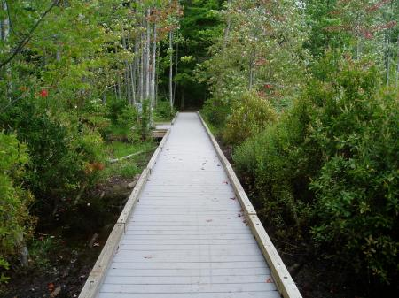 Trail at Willand Pond, Dover, NH